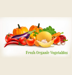 big set of colorful vegetables vector image vector image