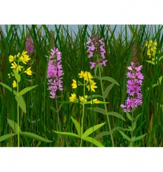 Meadow flowers vector