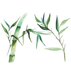 Watercolor bamboo vector