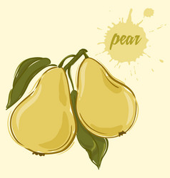 hand draw of pear vector image vector image