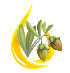 jojoba oil vector image