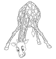 Animal outline for giraffe drinking vector
