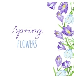 Early spring purple crocus and snowdrops nature vector