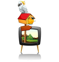 Parrots on television screen vector image vector image