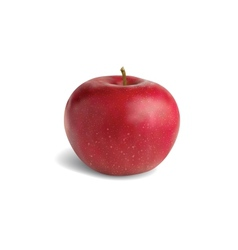 Realistic red apple vector