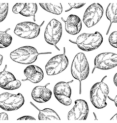 Spinach leaves hand drawn seamless pattern vector