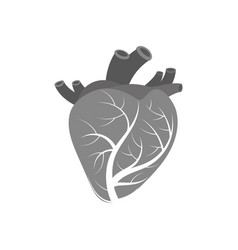 isolated human heart vector image vector image