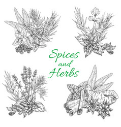 Sketch poster of spices and herb seasonings vector