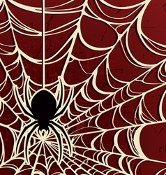 spider on a web three vector image vector image
