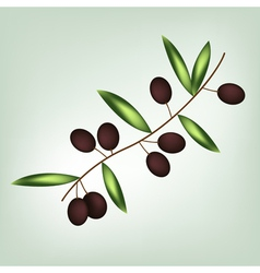 Olive brunch vector