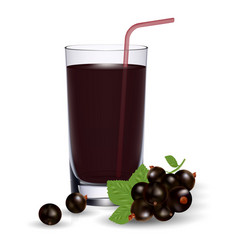 set of blackcurrant juice and fresh ripe berries vector image vector image