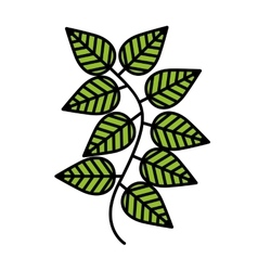 Mint leaves isolated icon design vector