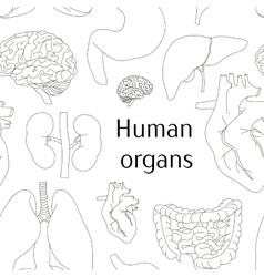 Different human organs set pattern vector
