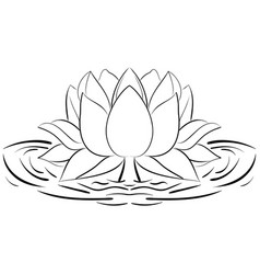 lotus sketch flower design elements vector image vector image