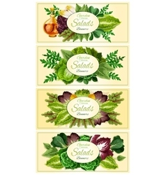 Fresh lettuce and green salad leaves banner set vector image