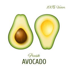 Realistic avocado vector