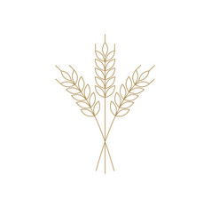 wheat or barley icon outline for logo vector image