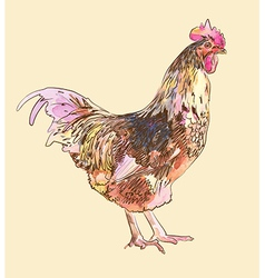 Hand draw watercolor painting sketch cock vector