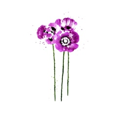 Collection of watercolor poppy flowers vector
