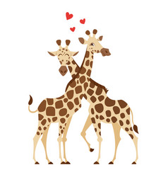 Cartoon style of two giraffes vector