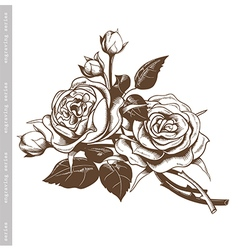 Hand sketched vintage bouquet of white roses vector