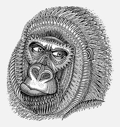 Patterned head of the gorilla in graphic style vector