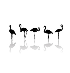 Flamingo birds vector image