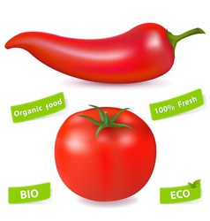 chili pepper and tomato vector image vector image