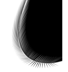 bent feather vector image