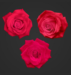 Realistic red roses isolated on a dark background vector