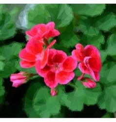 Geranium pelargonium flowers vector image