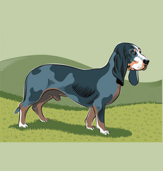 Male dog breed bassets vector