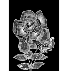 two roses vector image vector image