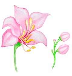Watercolor pink tropical flower vector