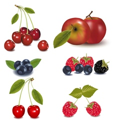 Berries and an apple vector