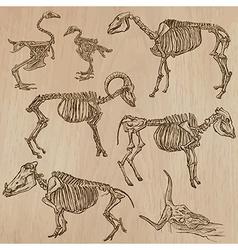 Bones skeletons of domestic animals- freehand vector