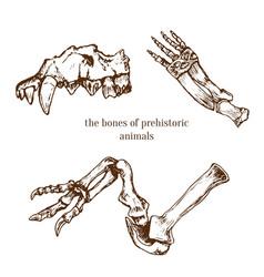 Sketchy prehistorical bones of animals vector