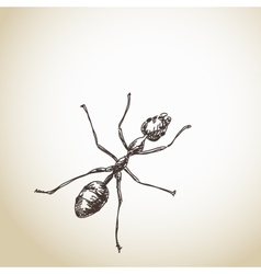 Hand drawn ant vector