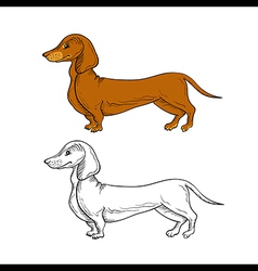 Two isolated dachshund dogs vector