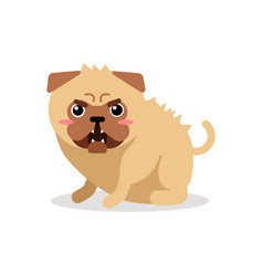 Cute cartoon angry pug dog character vector