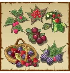 Big collection of red ripe delicious berries vector