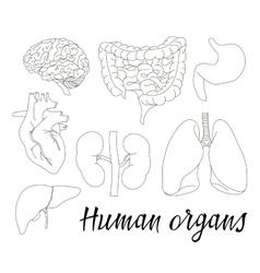 Different human organs set vector