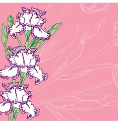 Pink background with irises vector