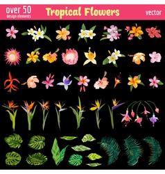 Tropical Flowers Design Elements Set vector image
