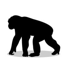 Chimpanzee monkey primate black silhouette animal vector