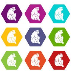Orangutan icon set color hexahedron vector