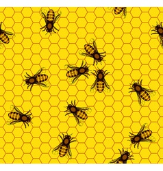 Bee on honeycomb pattern vector image