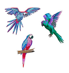 color seth from parrots in vector image