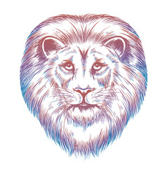 colorful lion head vector image vector image