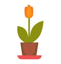 orange tulip plant in flowerpot colorful vector image vector image